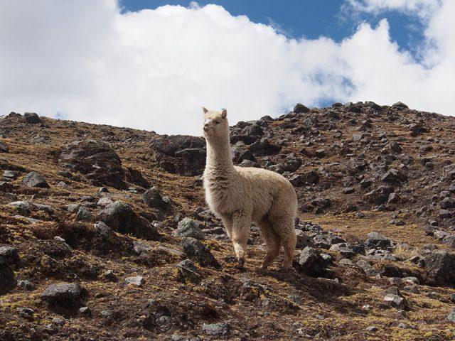 Perù Viaggio Sostenible: paesaggi andini