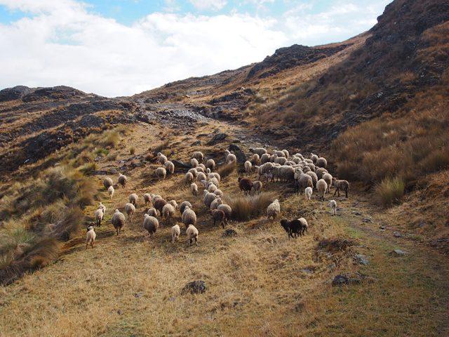 Perù Viaggio Sostenibile: Paucartambo